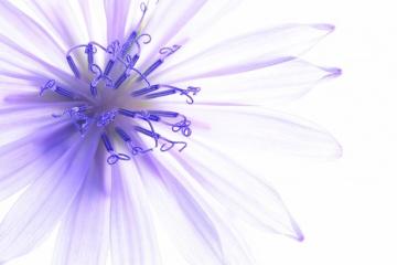 Blumen, Juni, Sommer, Sommerblumen, BeautyZoom, Beauty Magazine, Blüten, Exotische Blumen