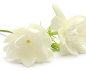 Hautpflege, Luxuskosmetik, Panpuri, Panpuri Beauty, organic beauty, panpuri cosmetics, natürliche kosmetik, natürliche hautpflege, beauty, beautyzoom, beauty magazin